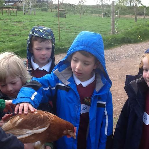 Stroking one of the 16,000 chickens