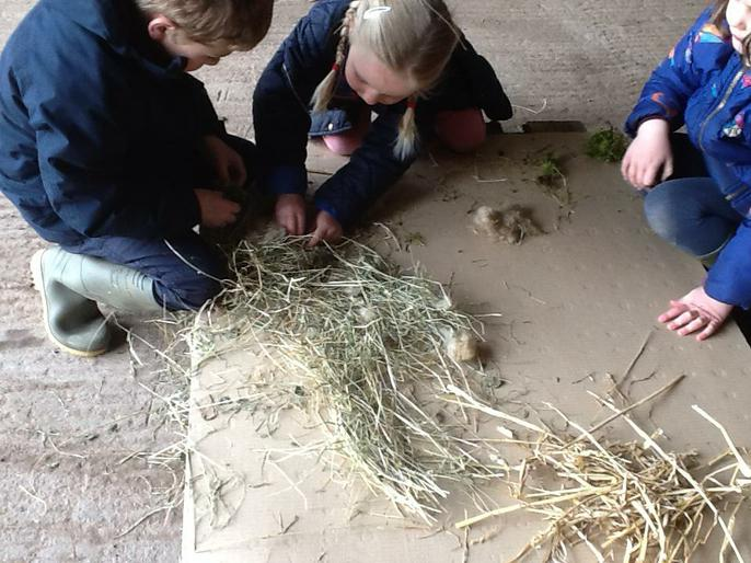 Pretending to be birds and building nests