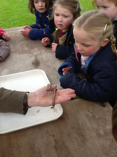 Meeting a slow worm