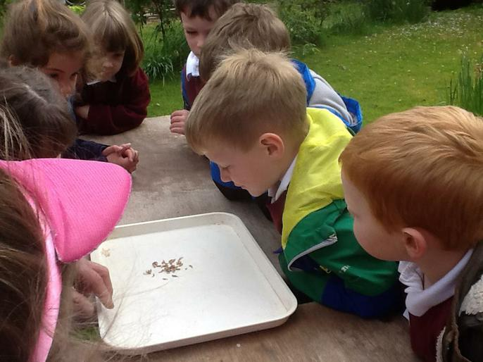 Discovering how maggots help us