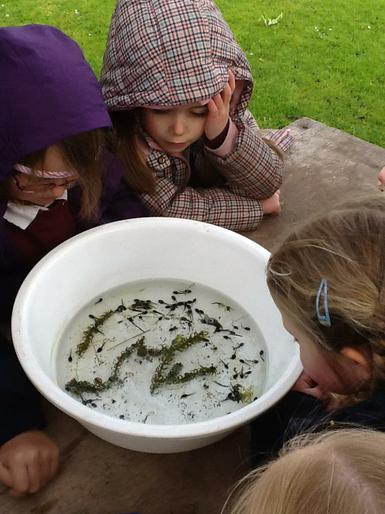Reminding ourselves how tadpoles turn into frogs