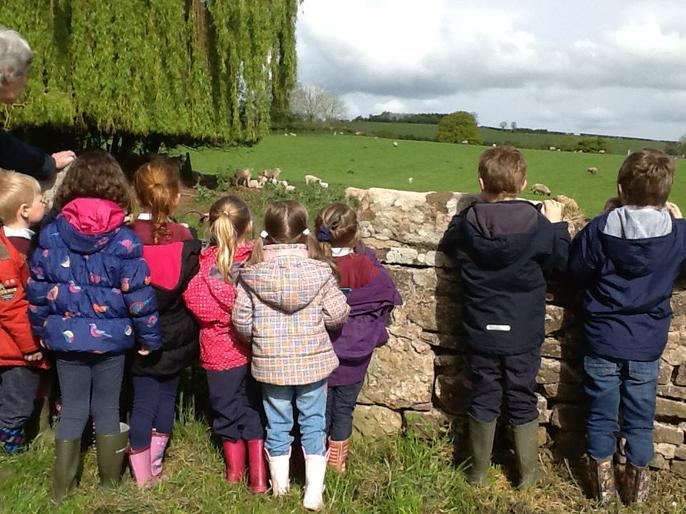 Talking about the sheep and lambs.