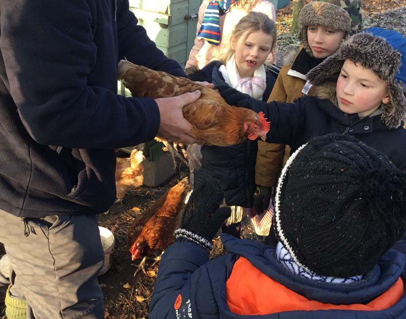 Feeding the chickens