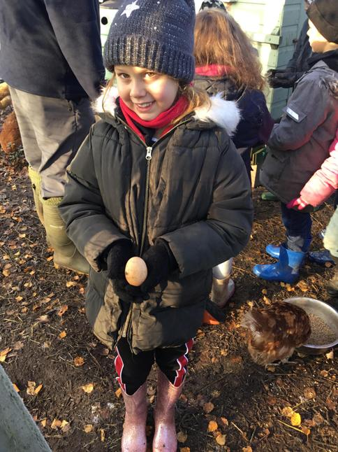 Feeding the chickens and collecting their eggs