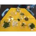 Exploring Herbs and Plant Leaves