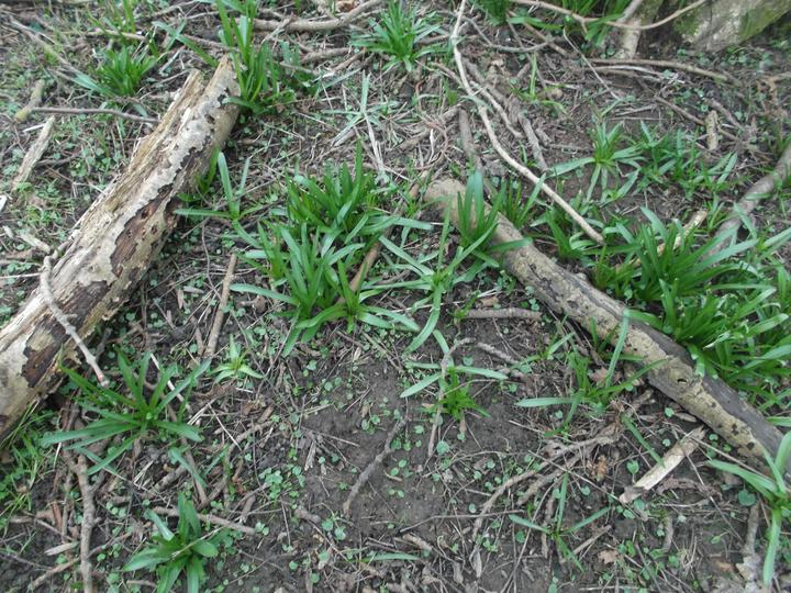 Soon there will be Bluebells.