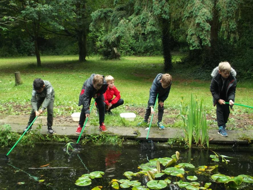 Pond Study - 'borrowing' some wildlife to study.
