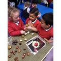 Look at the conkers! They grow on trees.