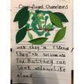 Walter's Chameleon