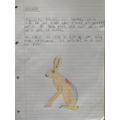 Jake's hare description