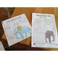Abigail's fact finding - elephants