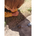 Observing the distance travelled by Snail
