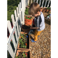 Walter's gardening
