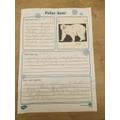 Ben's polar bear facts