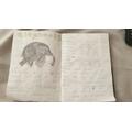 Blake's Safari booklet - Elephants