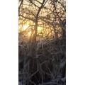 An icy bush