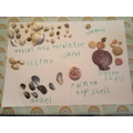 Harriet's sea shell collection