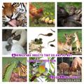 Eden's baby animals