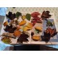 Harriet's Autumn collage