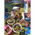 Grace Gardening