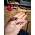 Freya rescued a May Bug