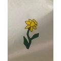 Maisie's daffodil