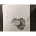 Archie's apple