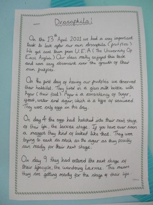 Daisy's summary part 1