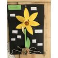 Tomas' Sunflower