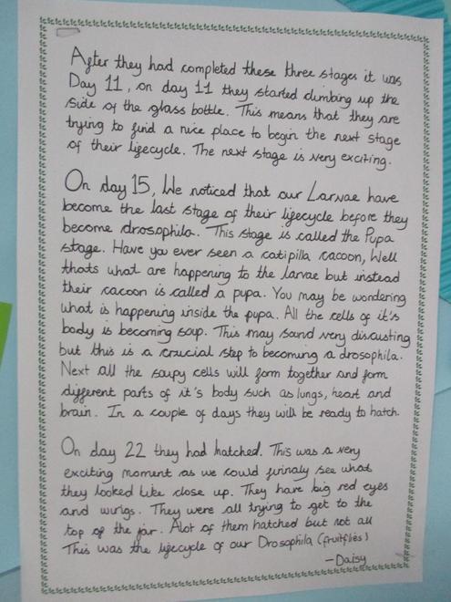 Daisy's summary part 2