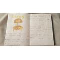 Blake's Safari booklet - Lions