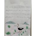 Jake - ostriches