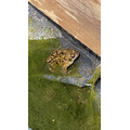 A frog in Logan's pond