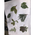 Jack's leaf investigation