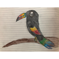 A wonderful toucan by Jia