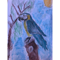 Benji's wonderful  macaw drawing with colour
