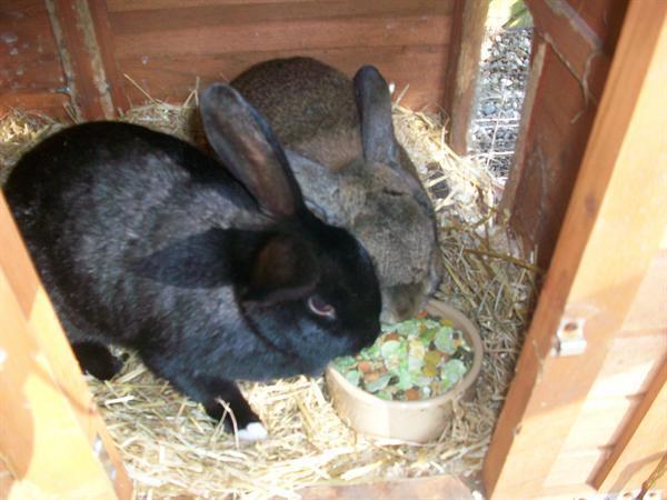 Breakfast time for Nutmeg and Pepper!