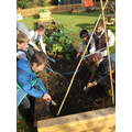 Weeding and planting in the garden