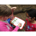 Multiplication in the woods