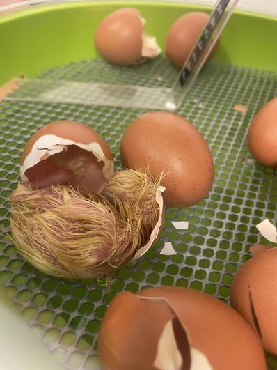 How 'EGGCITING'