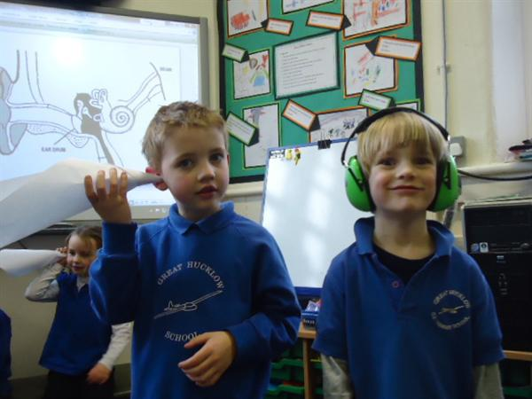 Learning about our ears