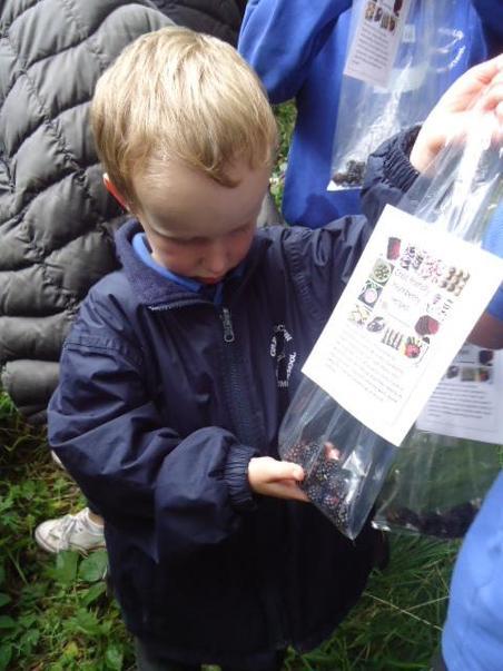 Counting blackberries.