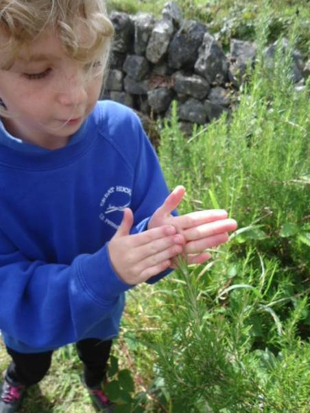 We love growing and smelling the herbs.