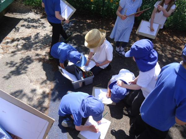 Observational drawings in the sunshine