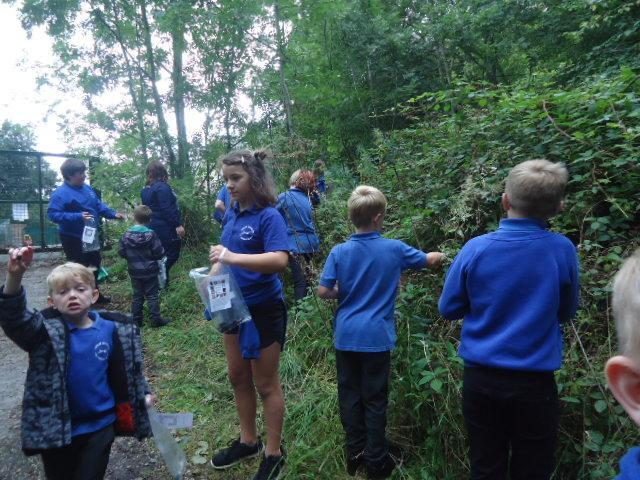 A blackberry picking challenge in our woods.