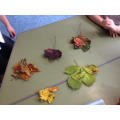 Sorting leaves - shape, colour, texture, size