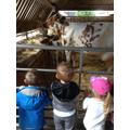 Tatton Park School Trip