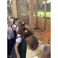 Our visit to the chickens