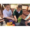 We made a herb garden.