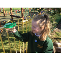 We hunt for minibeasts and look at them carefully.